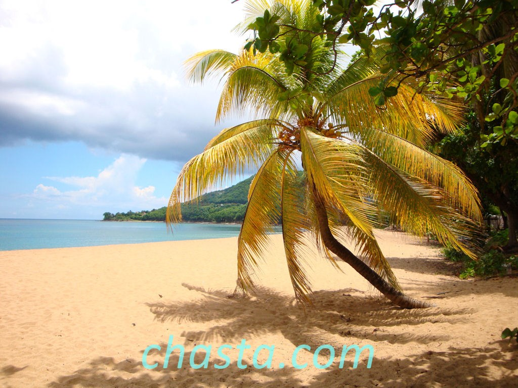 location guadeloupe : plage grande Anse Deshaies